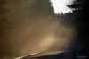 Päike paitab puude vahelt Pildi saatis: skalmer Kirjeldus: