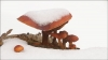Metsa seenele  Pildi saatis: BERTA07 Kirjeldus: Kuna lund pole palju, võib praegu vee korraliku pannitäie seeni saada. Pildistatud 26.01.2015 Harjumaal